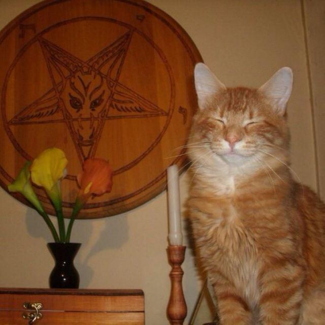 satan-cat