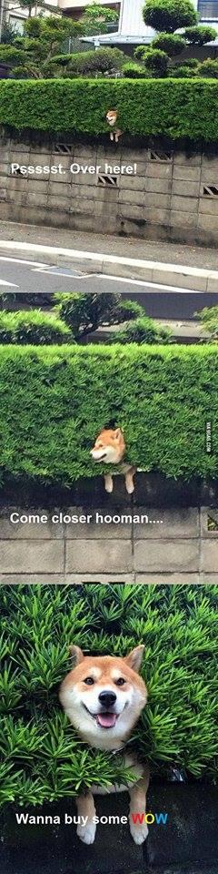 wanna-buy-some-wow-doge
