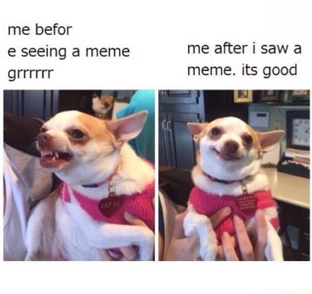 dog-before-after-meme