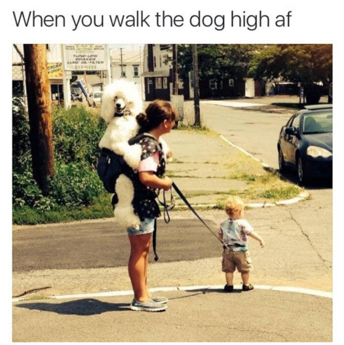 when-walk-dog-high-af