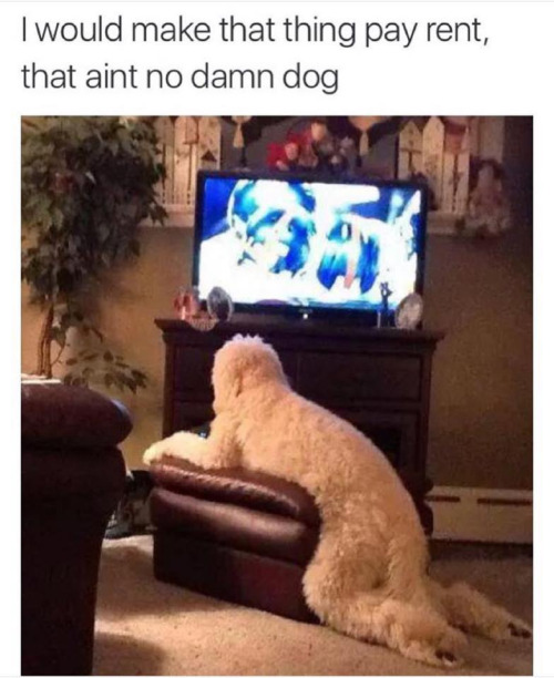 aint-no-damn-dog